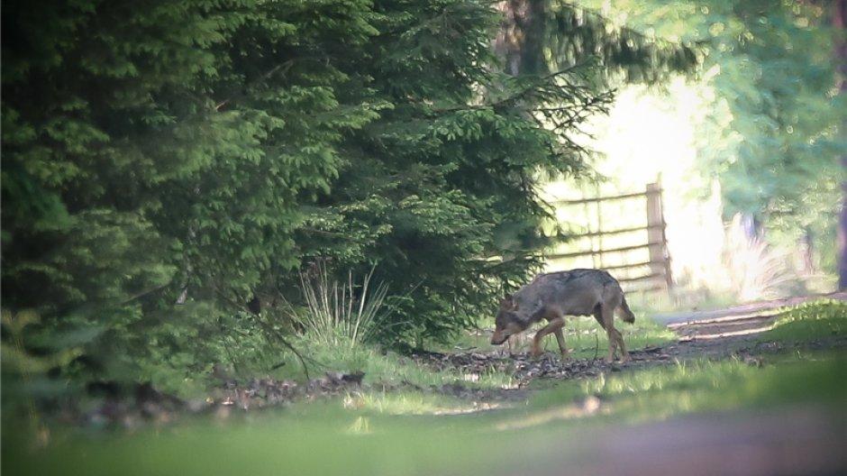 Wolfe In Deutschland Interaktive Karte Der Vorkommen